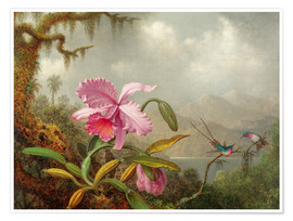 Premiumposter  Cattleya Orchid and Three Hummingbirds - Martin Johnson Heade