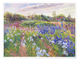 Premiumposter  Field of flowers - Timothy Easton