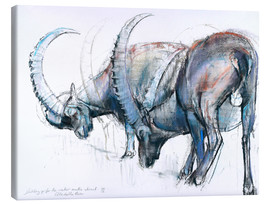 Canvastavla  Ibex searching food - Mark Adlington