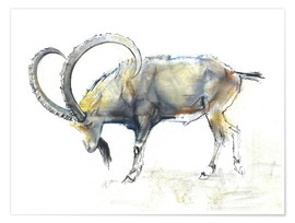 Premiumposter  Ibex - Mark Adlington