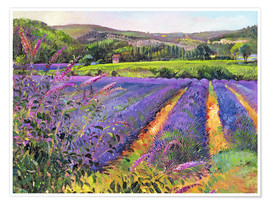 Premiumposter  Lavender field - Timothy Easton