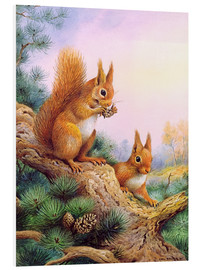 PVC-tavla  Pair of Red Squirrels on a Scottish Pine - Carl Donner
