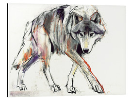 Aluminiumtavla  Wolf in search - Mark Adlington