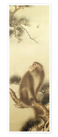 Premiumposter Monkey watching a dragonfly