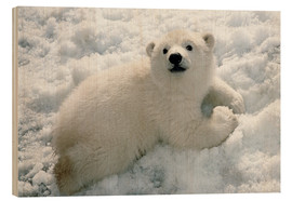 Trätavla  Young polar bear in the snow - Mark Newman