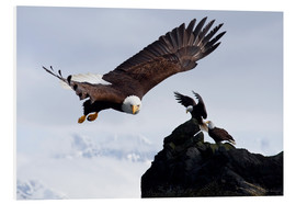 PVC-tavla  Bald Eagle in flight - John Hyde