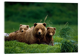 Akrylglastavla  Grizzly bear with cubs - Jo Overholt