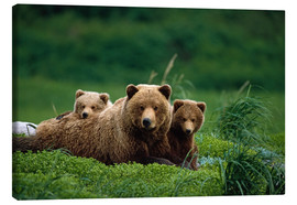 Canvastavla  Grizzly bear with cubs - Jo Overholt