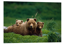 PVC-tavla  Grizzly bear with cubs - Jo Overholt