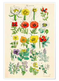 Poster Wildflowers