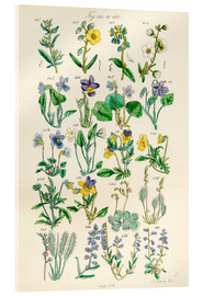 Akrylglastavla  Wildflowers - Sowerby Collection