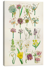 Canvastavla  Wildflowers - Sowerby Collection