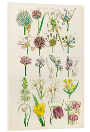 PVC-tavla  Wildflowers - Sowerby Collection