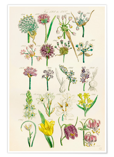 Poster Wildflowers, Sowerby 1281-1300