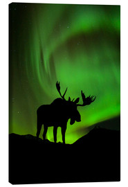 Canvastavla  Moose silhouette with Aurora borealis - John Hyde