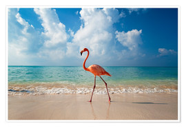 Premiumposter  Flamingo on the beach - Ian Cuming