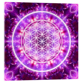 Akrylglastavla  Flower of Life - Transformation - Dolphins DreamDesign