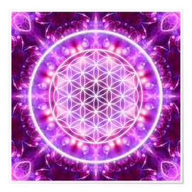 Premiumposter  Flower of Life - Transformation - Dolphins DreamDesign