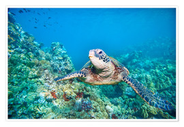 Premiumposter Green Turtle