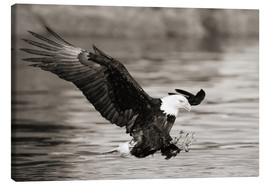 Canvastavla  Bald Eagle Hunting - John Hyde