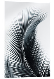 Akrylglastavla  Palm fronds - Larry Dale Gordon