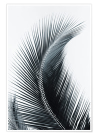 Poster  Palm fronds - Larry Dale Gordon