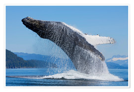 Premiumposter Jumping Humpback Whale