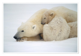 Premiumposter  Polar bear mother with cub - Kenneth Whitten