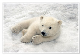 Premiumposter Polar Bear Baby