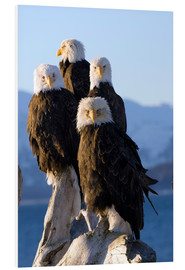 PVC-tavla  Bald Eagle on the shore of Kachemak Bay - Don Pitcher