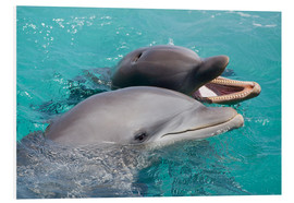 PVC-tavla  Two bottlenose dolphins - Dave Fleetham