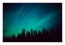Premiumposter  Northern Lights over a spruce forest - Greg Hensel