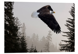 PVC-tavla  Bald Eagle in the Mist - John Hyde