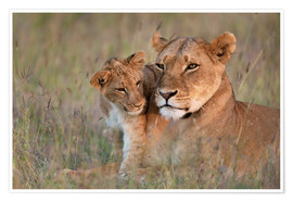 Premiumposter Lioness with cub