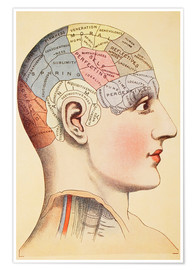 Premiumposter  Map of the human brain - Wunderkammer Collection