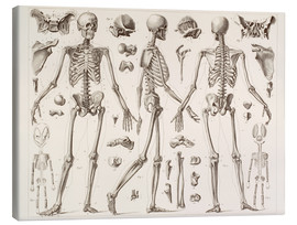Canvastavla  Skeleton Of A Fully Grown Human - Wunderkammer Collection