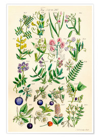 Poster  Wildflowers - Ken Welsh