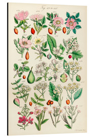 Aluminiumtavla  Wildflowers - Sowerby Collection
