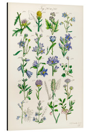 Aluminiumtavla  Wildflowers, Sowerby - Sowerby Collection