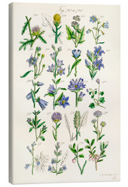 Canvastavla  Wildflowers, Sowerby - Ken Welsh