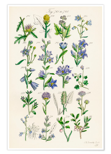 Premiumposter Wildflowers, Sowerby