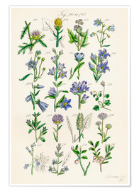 Premiumposter  Wildflowers, Sowerby - Sowerby Collection
