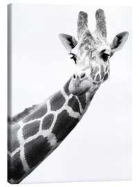 Canvastavla  Giraffe in black and white - Darren Greenwood