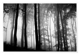 Premiumposter  Foggy Woods - The Irish Image Collection