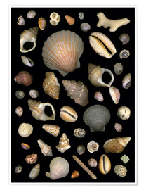 Premiumposter Various Sea Shells