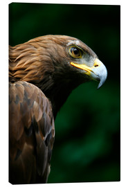 Canvastavla  Golden eagle - Deddeda