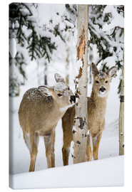 Canvastavla  Deers in a winter forest - Michael Interisano