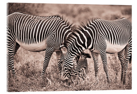 Akrylglastavla  Two Zebras Grazing Together - David DuChemin