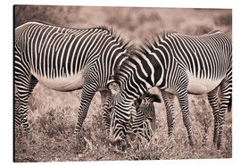 Aluminiumtavla  Two Zebras Grazing Together - David DuChemin
