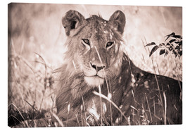 Canvastavla  Lioness between grasses - David DuChemin